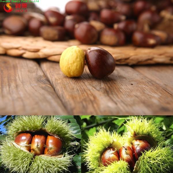 Chengde fresh chestnuts