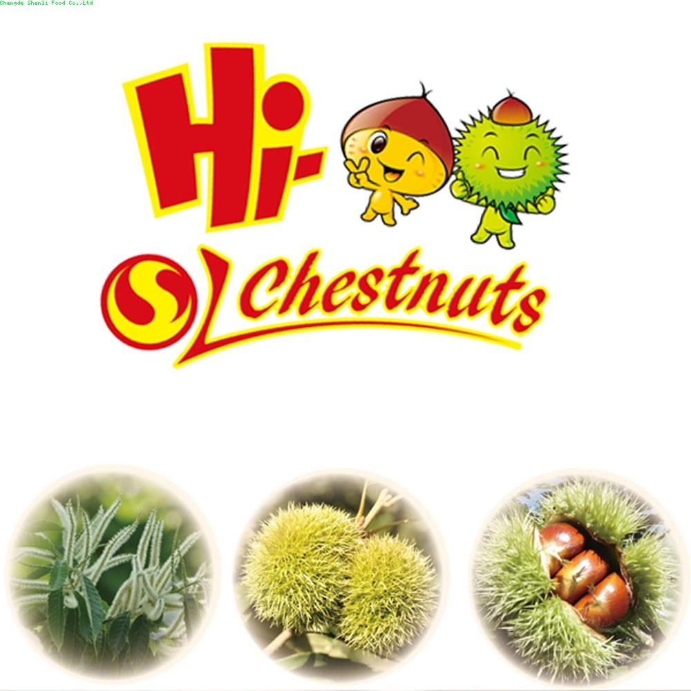 Export best fresh chestnuts