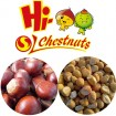 IQF Frozen Peeled Chestnut Castanea Sativa